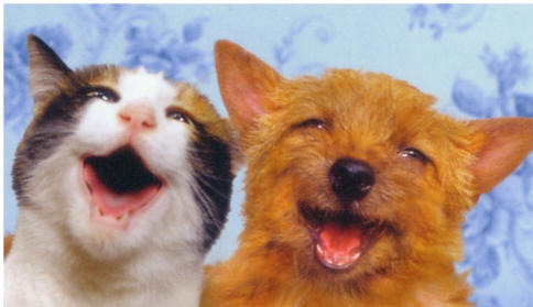 mascotas-pero-gasto-foto_comoloharias-via-peruenvideos