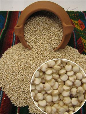 quinua peruana, grano andino - noticias