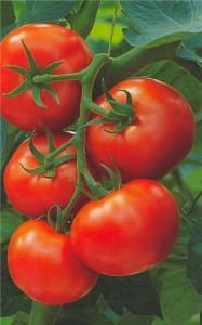 enfermedades cardiovasculares pueden prevenirse con el consumo de tomates - noticias