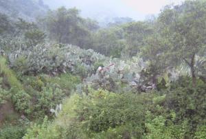 bosques de Lima