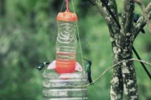 ave en peligro de extinción en la región amazonas