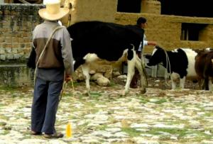 hacienda de Cajamarca