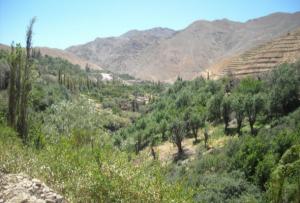 pueblo de Tacna que volvió a ser peruano