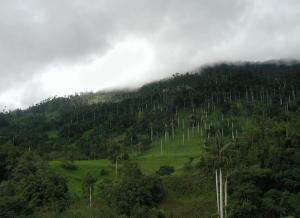 Parque nacional en Cajamarca