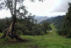 área protegida de Cutervo