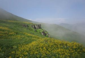 Lomas del Paraíso en Lima