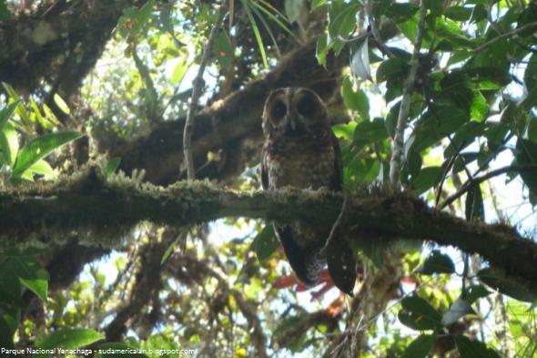 área natural en la selva peruana