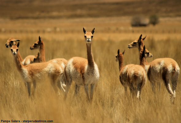 área natural y protegida de la vicuña
