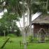 Disfrute de la selva amazónica en Tangarana Eco Lodge