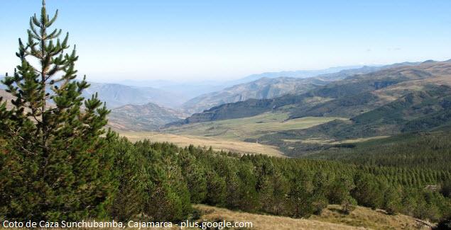 caza deportiva controlada en Cajamarca