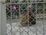 leon-rejas-parque-leyendas-peru