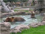 osos-parque-leyendas