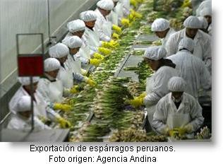 Exportación de espárragos desde Perú - Negocios de exportación.
