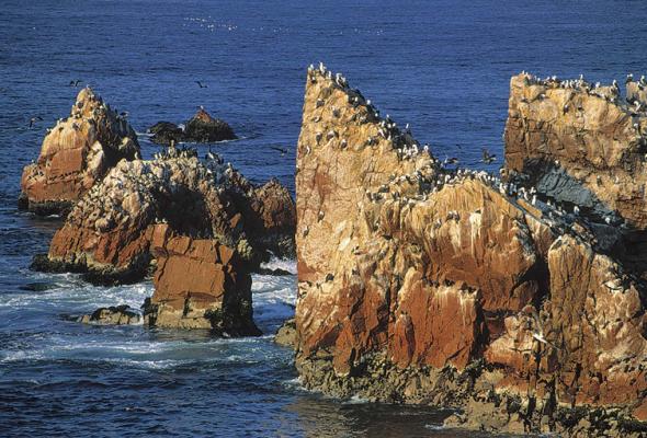 Islas Ballestas en Paracas, Ica