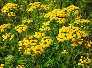 Con el uso de plantas medicinales tendremos mejor expectativa de vida