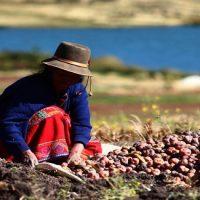 24 de junio: El Día del Campesino