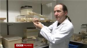 ratas topos lampiñas resisitentes al cáncer