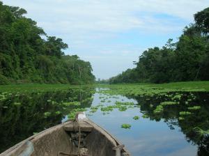Pucacuro en Loreto Area protegida