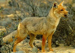 Reserva Nacional de Lachay, lomas de Lima - noticias
