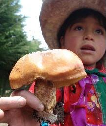 hongos comestibles, producto alimenticio - noticias