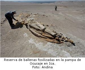Reserva de ballenas fosilizadas en la pampa de Ocucaje en Ica.