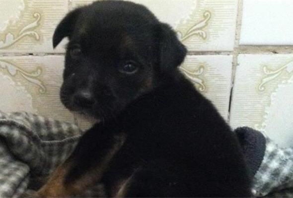 mascotas en adopcion, perros abandonados - noticias
