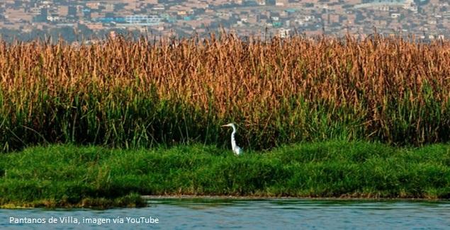 Pantanos de Villa Lima Chorrillos