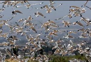 Humedades de Villa recibes muchas especies de aves - noticias