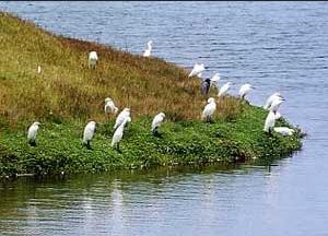 Diversas especies de aves en busca de mejor clima en Lima - noticias