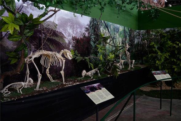 parque imaginacion y esqueleto de animales