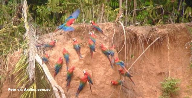 Biodiversidad de Tambopata en Madre de Dios