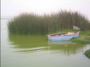 Imagen de una preciosa laguna cerca a Huacho en el Norte Chico de Lima