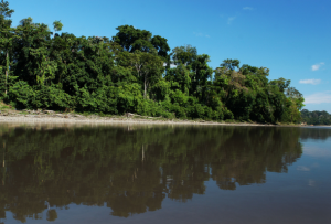 biodiversidad en la amazonia peruana