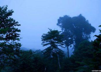Pucunucho, la reserva del mono tocón en San Martín