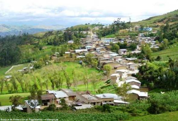 Bosque de Protección en Pagaibamba en Cajamarca
