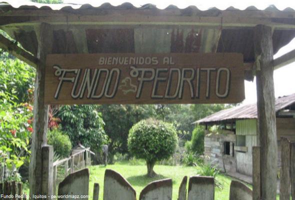 criadero de paiches y pirañas en Iquitos