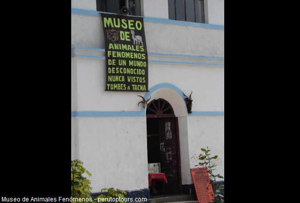 museo de animales fenómenos en Apurímac