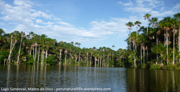 Lago en la Reserva Nacional Tambopata