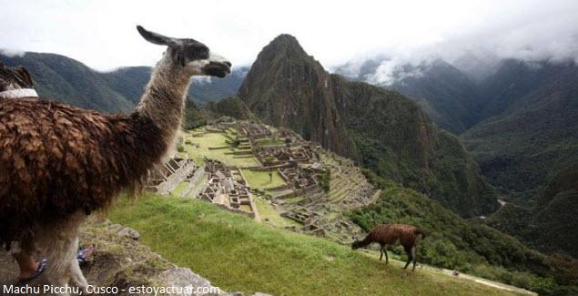Llama posa en fotografía junto a Machu Picchu