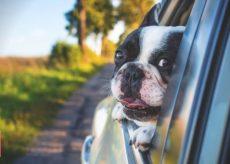Accesorios para viajar con perros en el automóvil