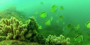 Foto submarina de arrecifes de Punta Sal