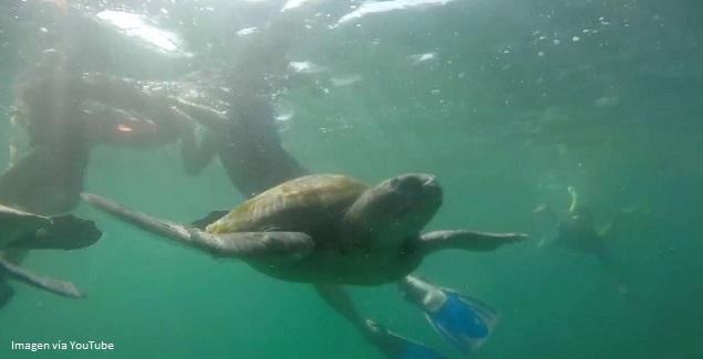 Foto submarina de tortugas marinas en el mar de Perú