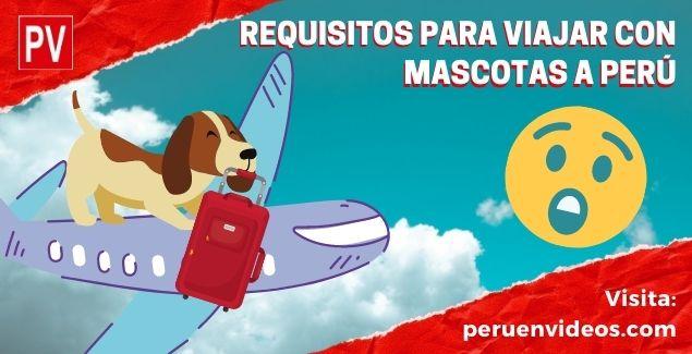 Requisitos para viajar con mascotas a Perú, en cabina de LATAM