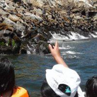 Tour marino en Islas Palomino para nadar con lobos marinos