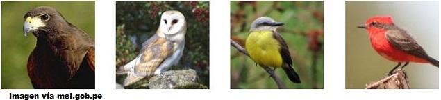 Observación de aves en el Parque El Olivar de San Isidro