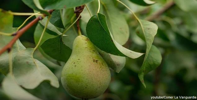Disminuye o elimina el colesterol alto consumiendo la Pera