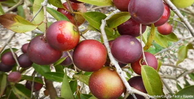 Camu Camu: El fruto peruano alto en vitamina C