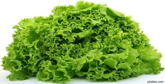 La Lechuga es la verdura que desintoxica el organismo