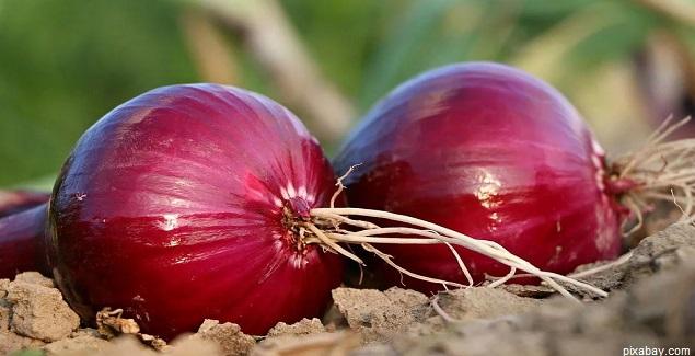 Combate las alergias y asma con el jarabe de cebolla