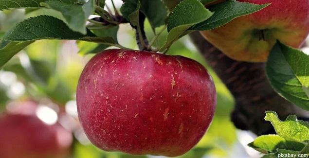 La Manzana protege la salud cardiovascular